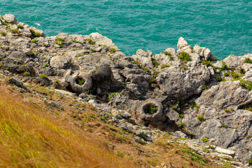 Lulworth Fossil Forest