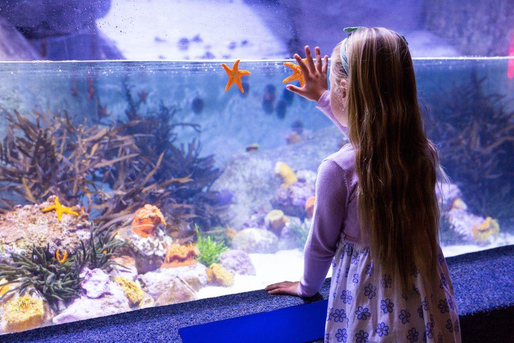 Sea Life Centre Weymouth Dorset