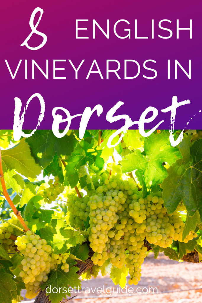 8 Vineyards in Dorset England
