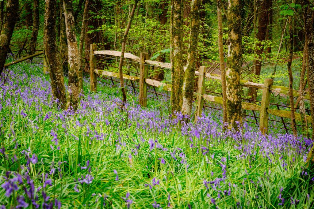 Thorncombe Woods Dorset