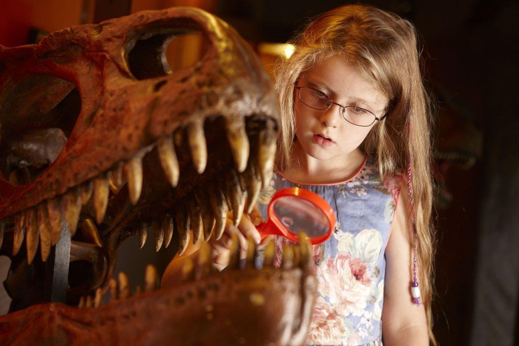 Dinosaur Museum Dorchester