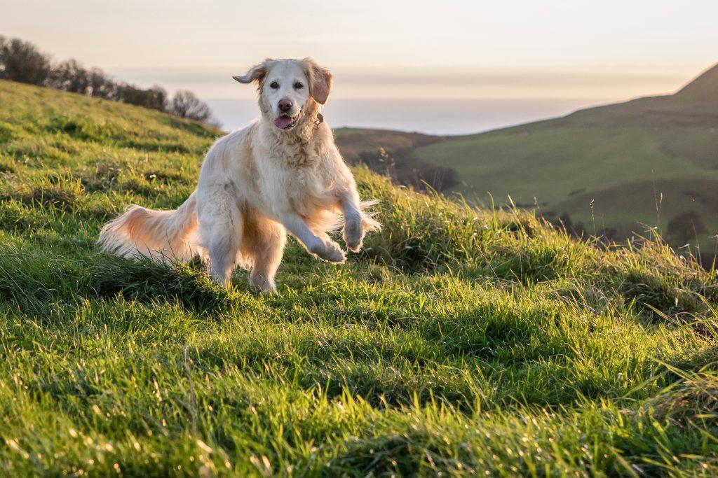 Dog friendly Dorset Cottages