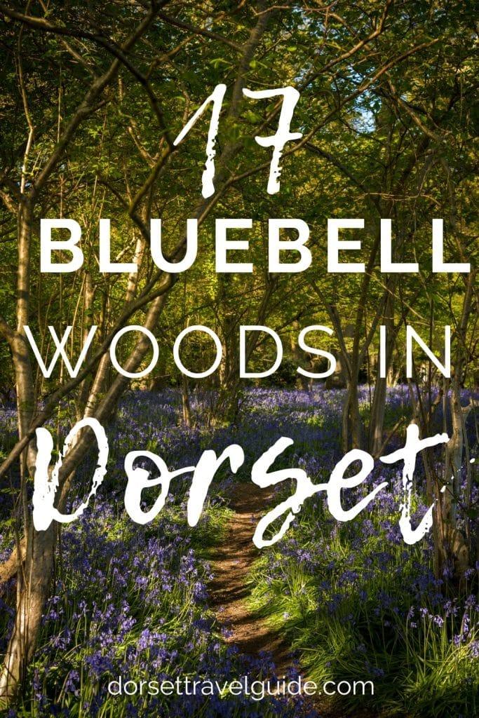 17 Bluebell Woods in Dorset