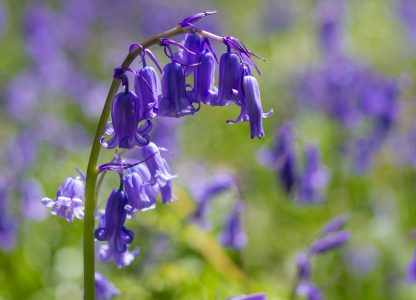 17 of the Best Springtime Bluebell Woods in Dorset