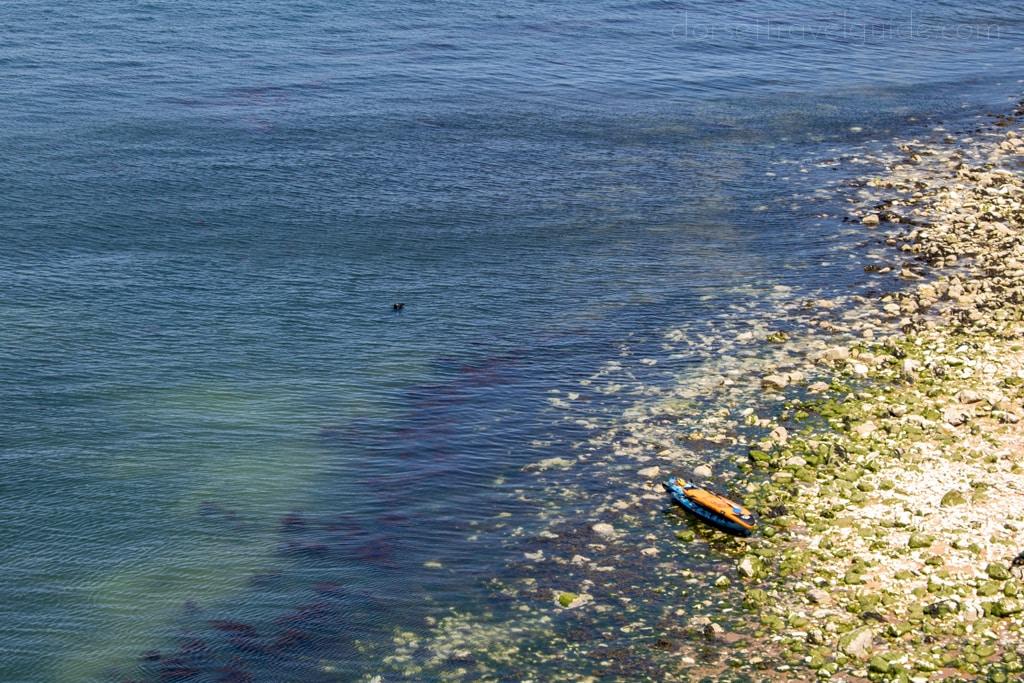 Seal at Old Harry Rocks